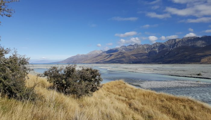 Braided river, birdlife, golden tussock grass